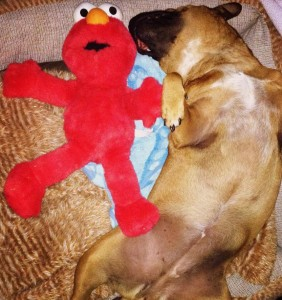 $4 Elmo for the pup in her life - I think it's love!